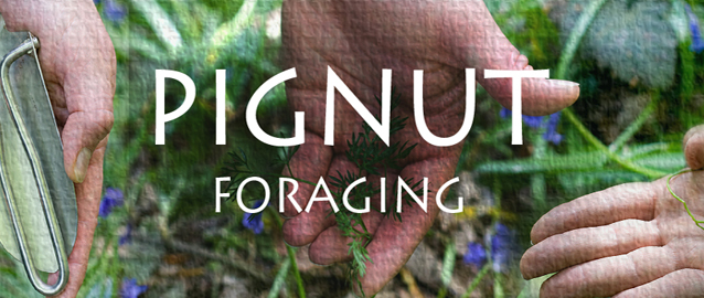 Foraging For The Pignut