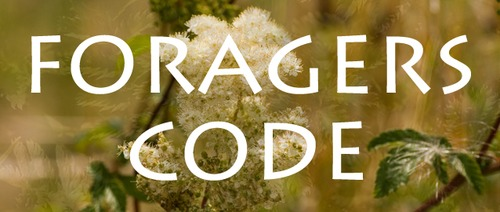 The Foragers Code