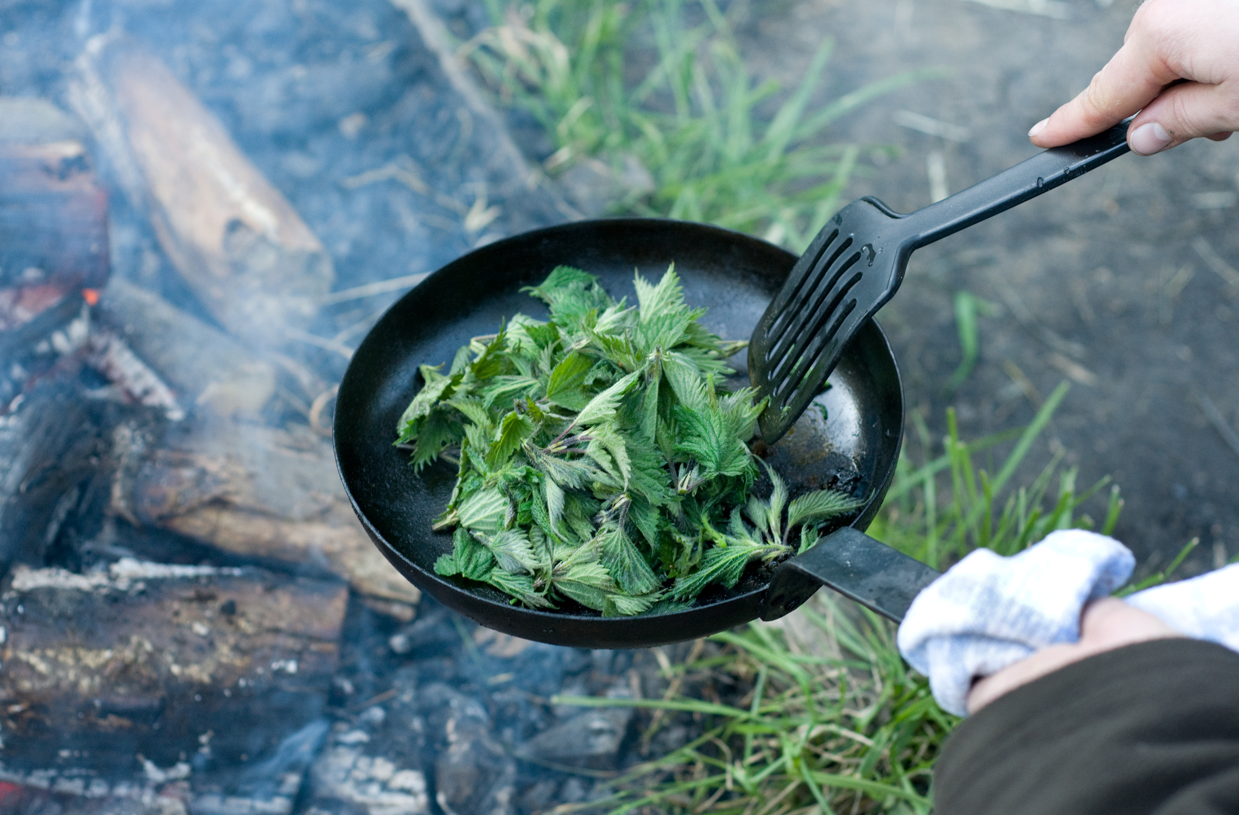 A Guide to Foraging Common Wild Foods